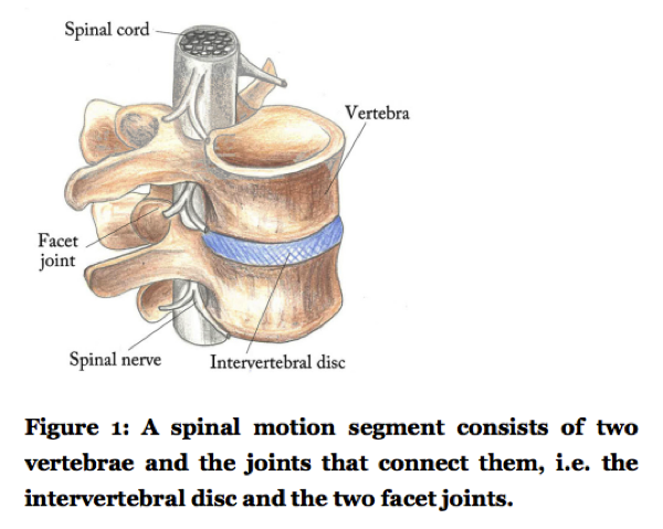 The spinal segment | Dr Alex Ritza