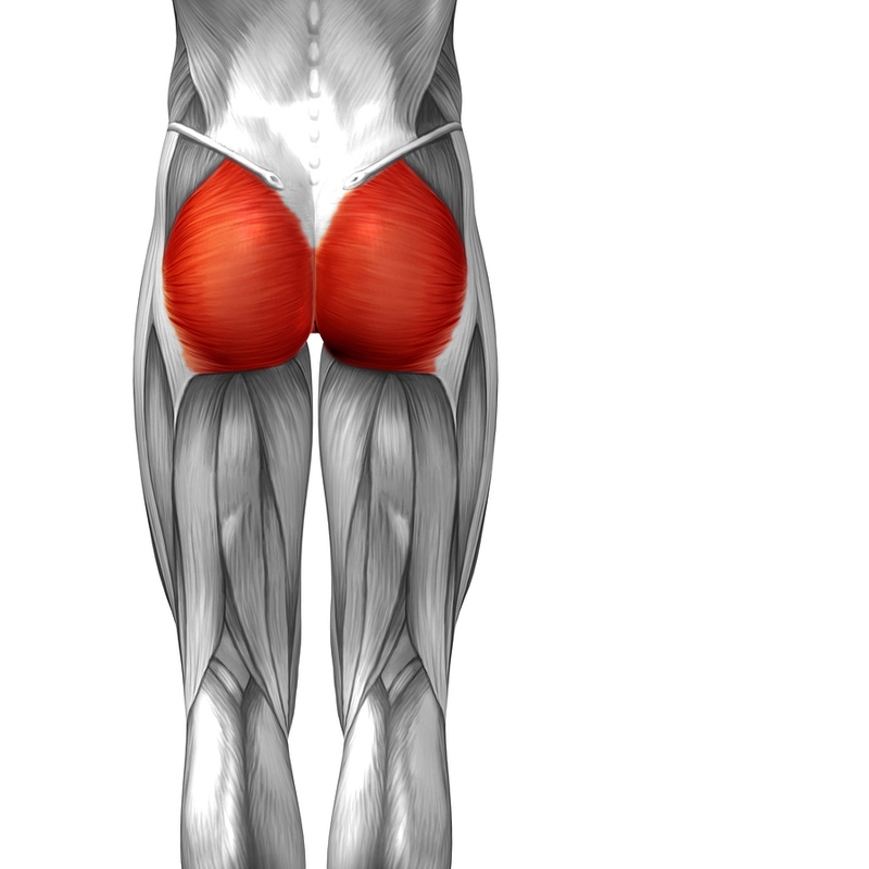 What Are The Lower Limb Muscles Anatomy On The Go