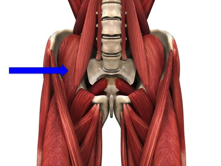 What are the lower limb muscles? - Anatomy On The Go
