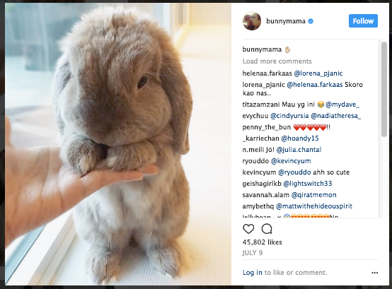 Bunny on Instagram with comments on side