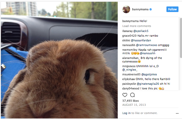 bunny too close to camera funny instagram