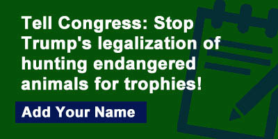 Tell Congress: Stop Trump's legalization of hunting endangered animals for trophies!