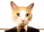 Felix r. cat