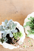 Fall succulent planter 7