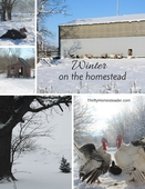 Winter on the homestead (1)