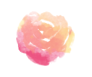 Roses new