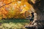 Happy couple yellowleaves treetrunk
