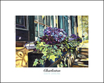 300px%c2%a9mariescott hydrangeaboxes 10x8poster