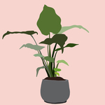Plant2pink bg small 2