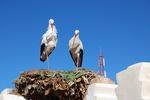 Storks 2104450 640