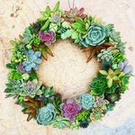 All around succulent wreath 12 inch